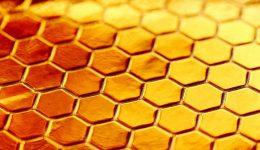 Le miel de Manuka: de l'Or Liquide à Prix Différents